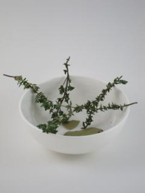 Dolegliwości codzienne i zioła przy nich stosowane.