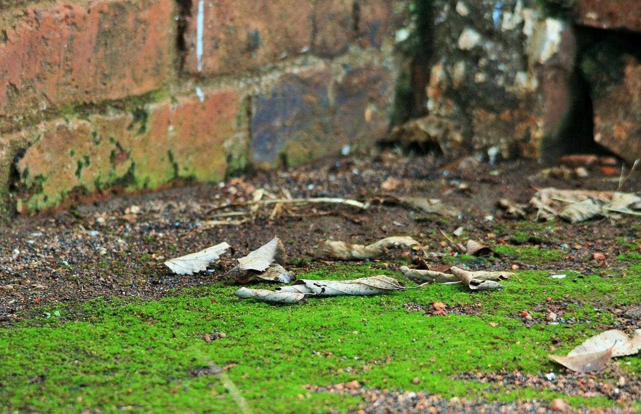 Osuszanie fundamentów – typy izolacji przeciwwilgociowych