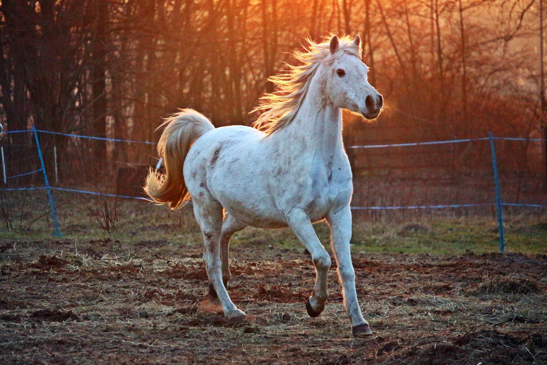 Jaką rolę w diecie pełnią witaminy dla koni?